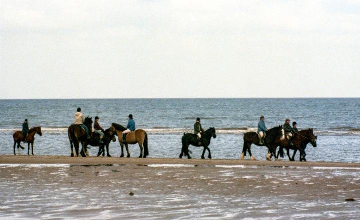 Horses On TheBeach