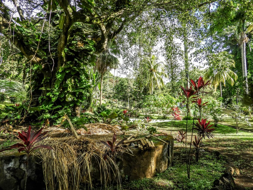 10 From The Caribbean :Botanicals